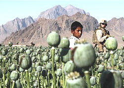 OITTP-AFGHANISTAN-DRUGS