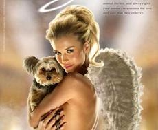 peta angel 2