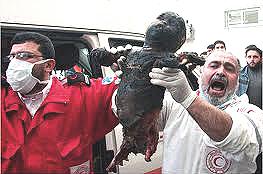Gaza vittime