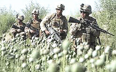 Afghanistan oppio e Marines