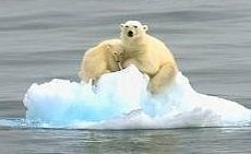 Orsi polari intrappolati su un iceberg alla deriva