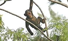Liberia, foresta vergine