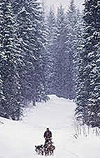 Tesson nella foresta del Bajkal