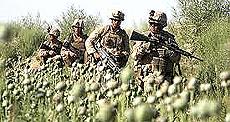 Soldati Nato tra i campi di papavero da oppio