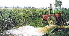 Irrigazione del mais