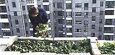 Un orto sul balcone