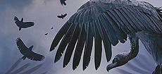 avvoltoi