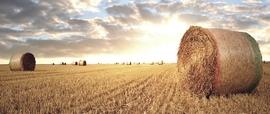 Il grano ucraino