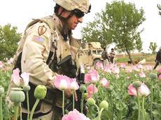Soldati Usa tra campi di papaveri da oppio