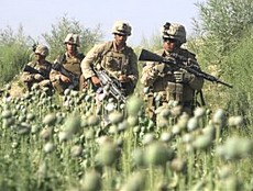 Soldati Usa tra i papaveri da oppio