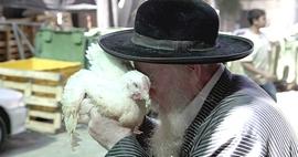 Il pollo del Kaparot (Foto: Abir Sultan/EPA)