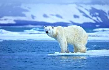 Fine dei ghiacci artici