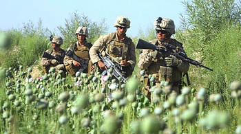 Soldati Usa nei campi di oppio in Afghanistan