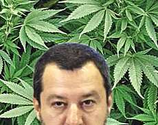 Salvini cannabis