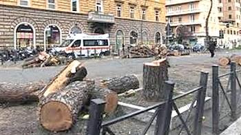 Lo scempio degli alberi