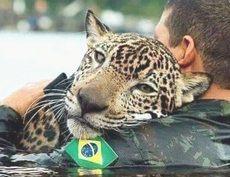 Un ranger brasiliano soccorre un giaguaro