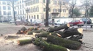 La strage degli alberi nelle città italiane