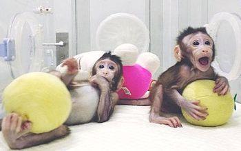 Macachi clonati in Cina