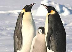 Pinguini, Antartide